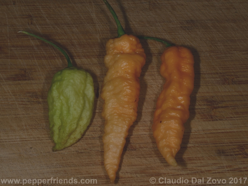 bhut-jolokia-orange_001_frutto_08.jpg