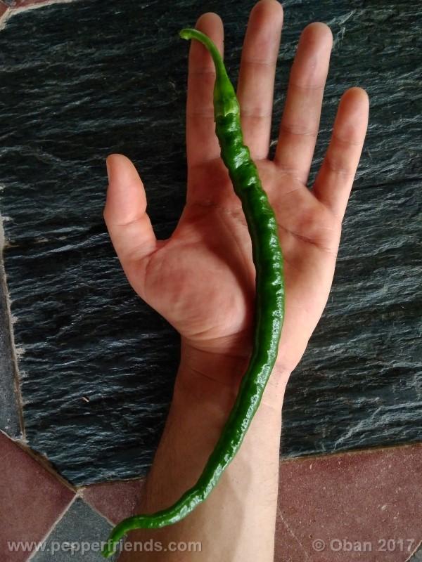lazzaretto-abruzzese_001_frutto_09.jpg