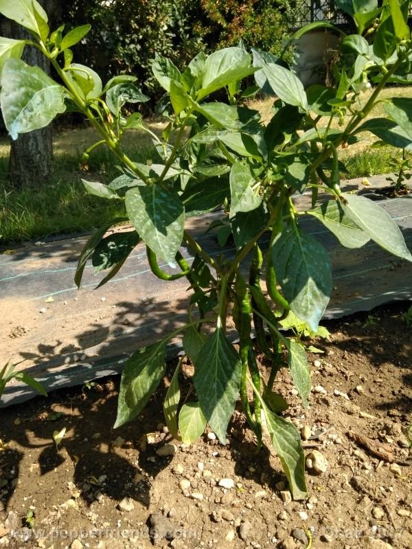 lazzaretto-abruzzese_001_pianta_30.jpg