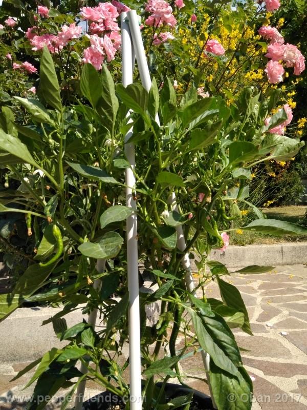 lazzaretto-abruzzese_001_pianta_31.jpg
