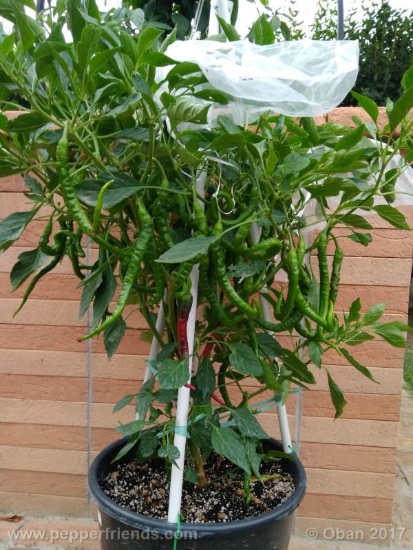 lazzaretto-abruzzese_001_pianta_45.jpg