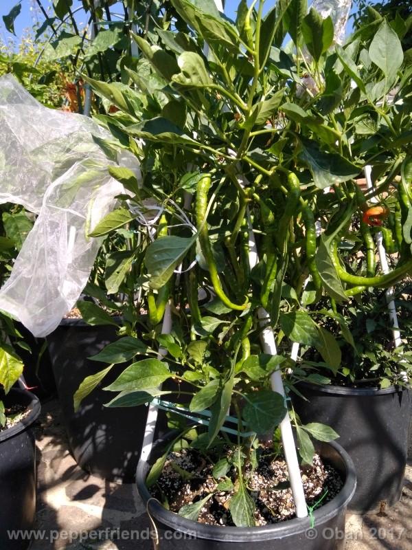 lazzaretto-abruzzese_001_pianta_47.jpg