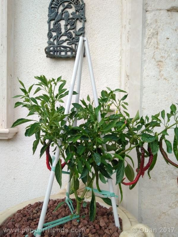 lazzaretto-abruzzese_001_pianta_54.jpg