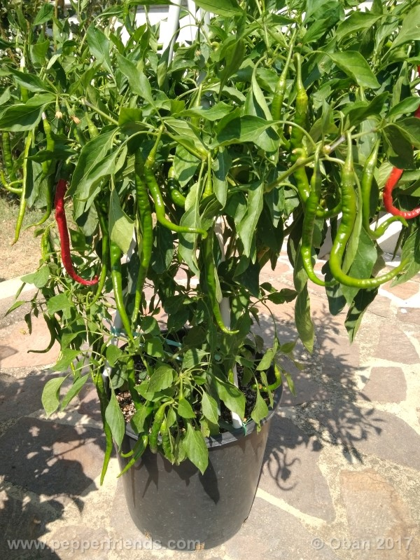 lazzaretto-abruzzese_001_pianta_60.jpg