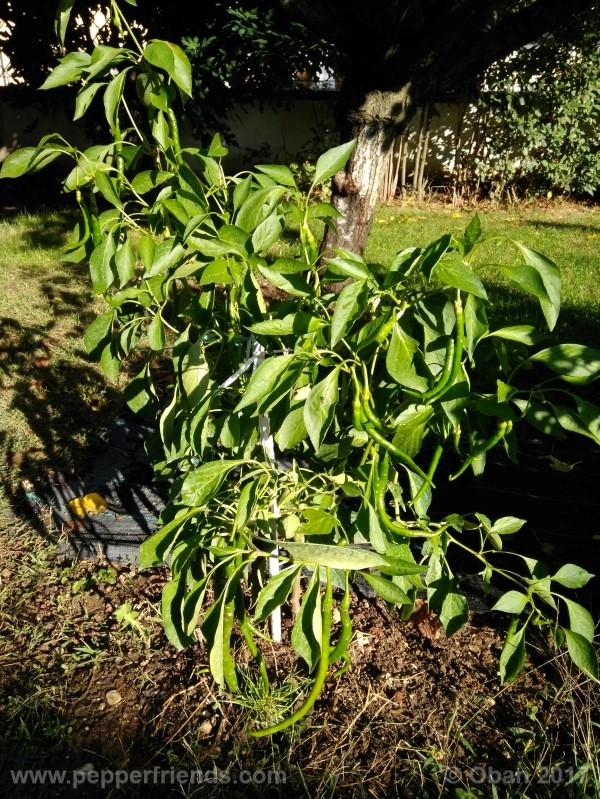 lazzaretto-abruzzese_001_pianta_64.jpg