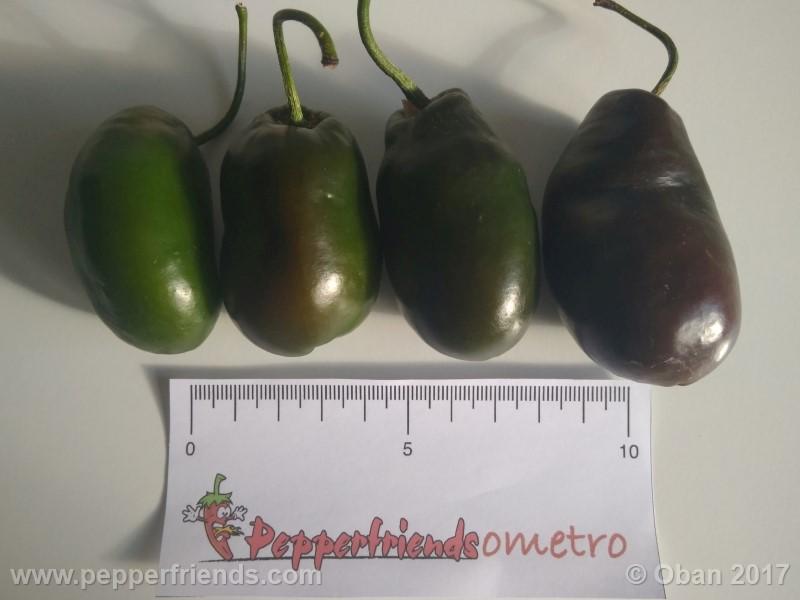 rocoto-brown_001_frutto_16.jpg