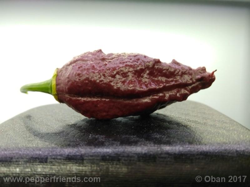 bhut-jolokia-chocolate_003_frutto_22.jpg