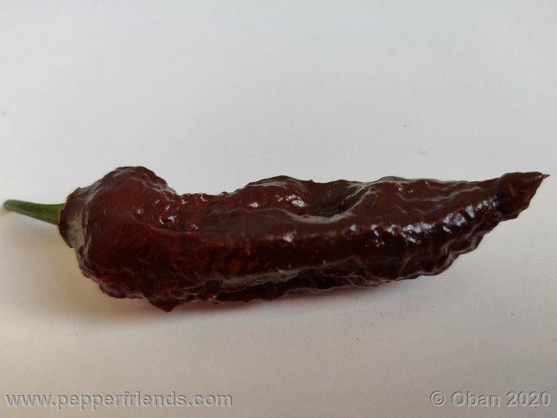 bhut-jolokia-chocolate_005_frutto_34.jpg