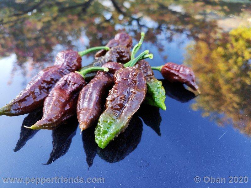 bhut-jolokia-chocolate_005_frutto_37.jpg