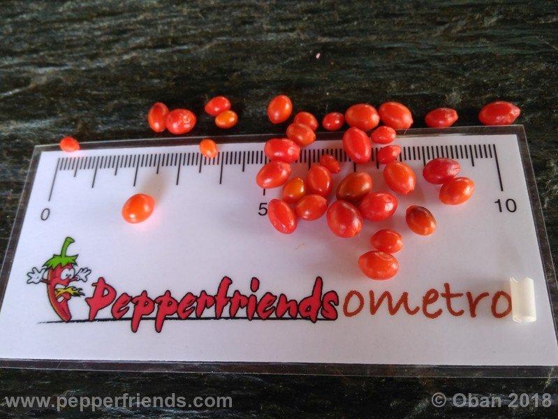 https://www.pepperfriends.org/uploads/chiltepin-national-park-of-tikal-guatemala/001/chiltepin-national-park-of-tikal-guatemala_001_frutto_14.jpg