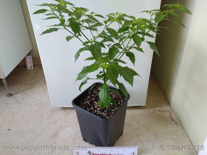 nome-cultivar_001_pianta_08.jpg