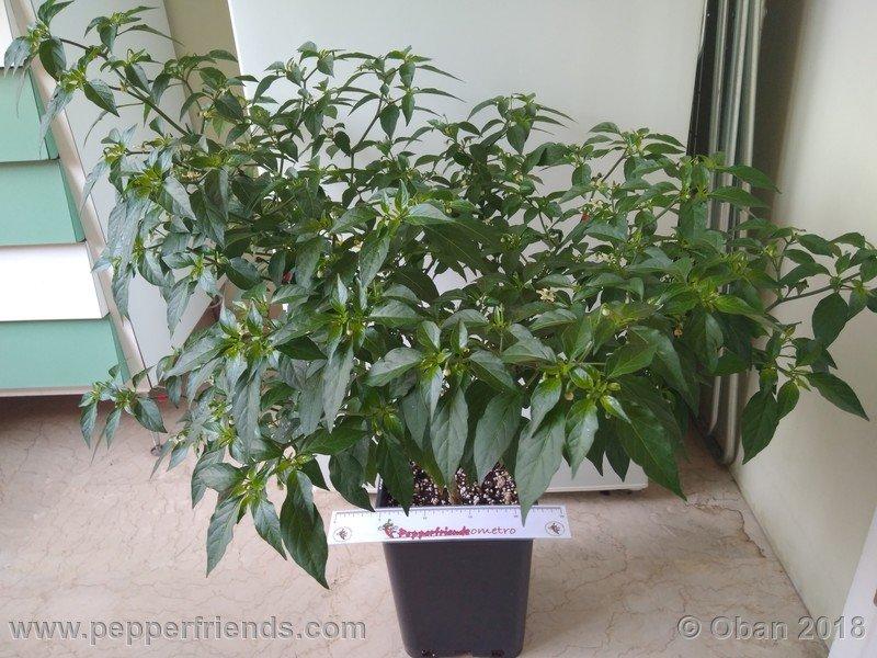 nome-cultivar_001_pianta_09.jpg