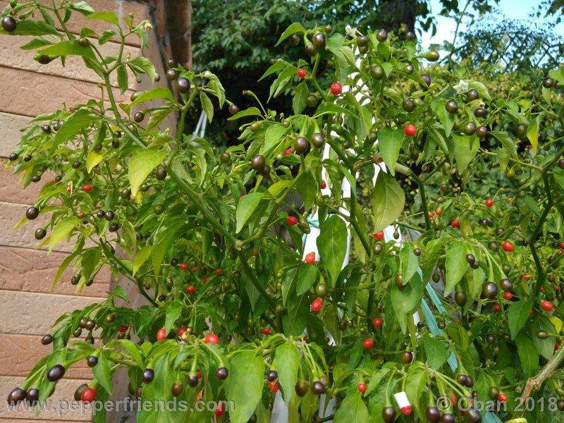 nome-cultivar_001_pianta_16.jpg