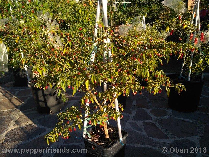 nome-cultivar_001_pianta_19.jpg