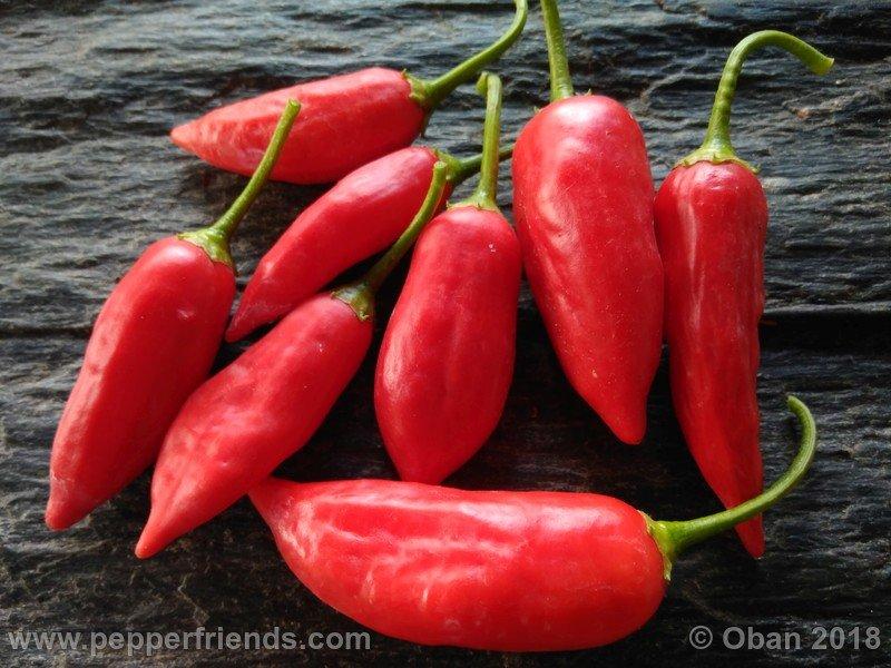 https://www.pepperfriends.org/uploads/dong-xuan-market/001/dong-xuan_market_001_frutto_10.jpg