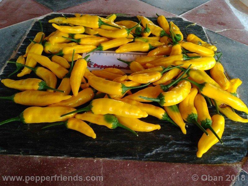 https://www.pepperfriends.org/uploads/hot-lemon/004/hot-lemon_004_frutto_21.jpg