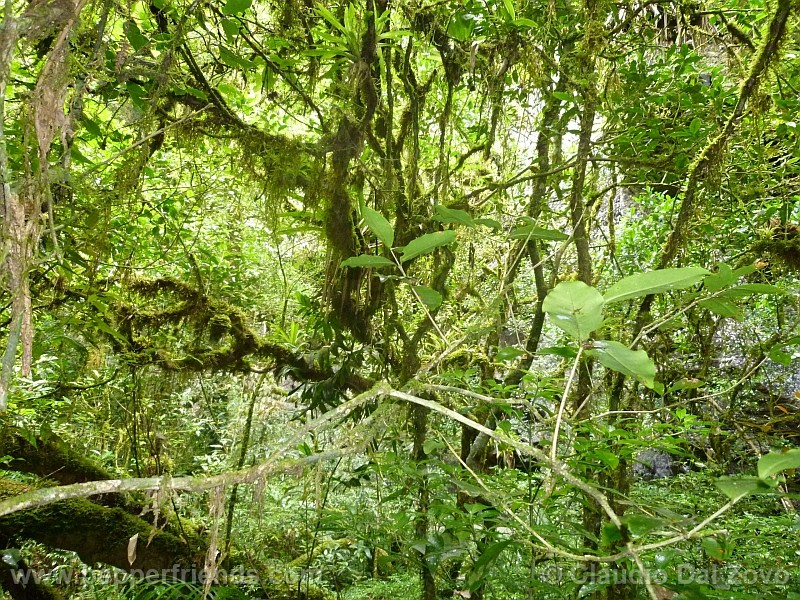 pereirae_001_habitat_06.jpg