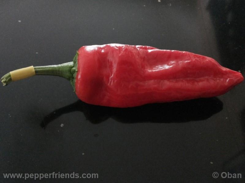 https://www.pepperfriends.org/uploads/pimenta-de-padron/001/pimenta-de-padron_001_frutto_12.jpg
