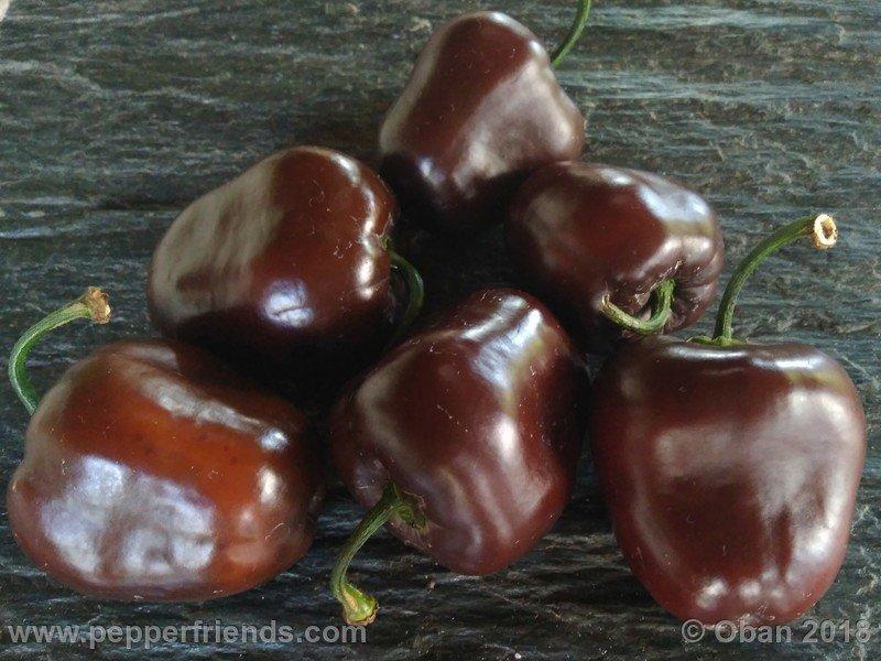 https://www.pepperfriends.org/uploads/rocoto-big-brown/001/rocoto-big-brown_001_frutto_13.jpg